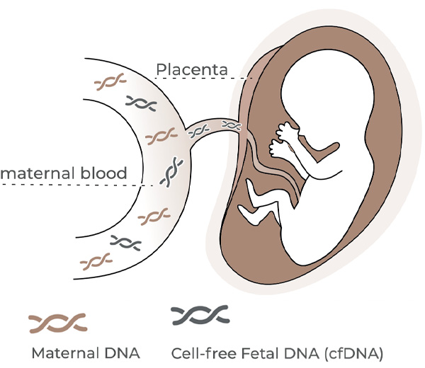 fetal dna technology